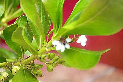 abeja-small